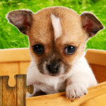 Dogs Jigsaw Puzzles Game – For Kids & Adults 🐶 APK MOD 26.4
