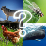 🐷 Zoo sounds quiz 🐷 APK MOD 4.8
